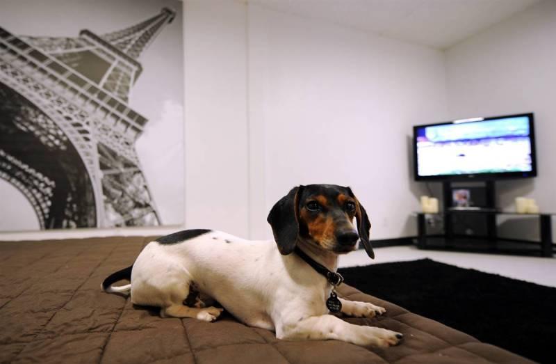 pet-hotel-dog