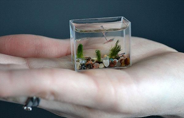 smallest aquarium