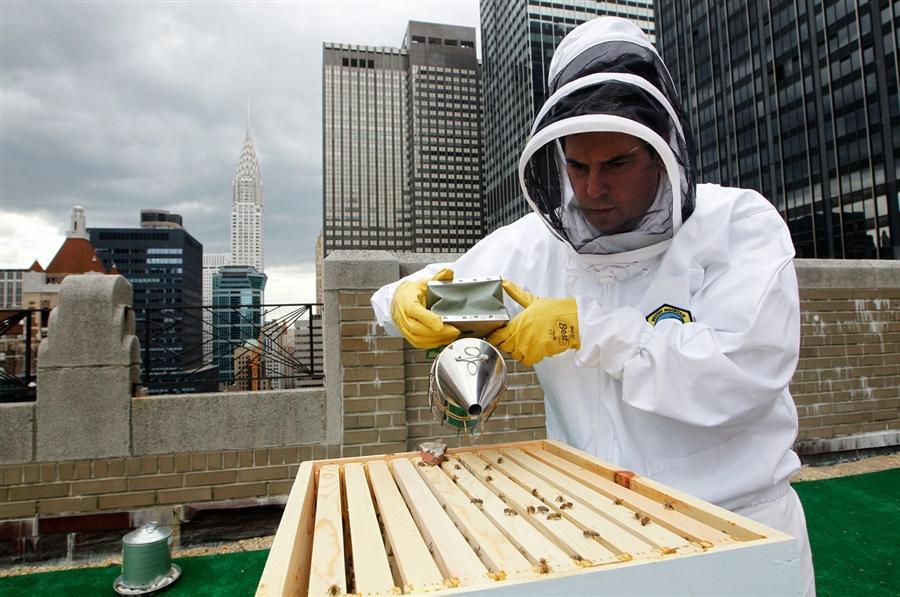 Waldorf-Astoria beekeeping rooftop