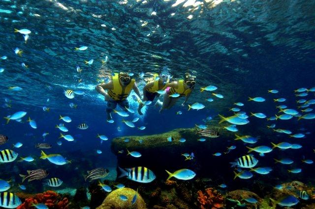 Adventure Cove Waterpark Rainbow Reef