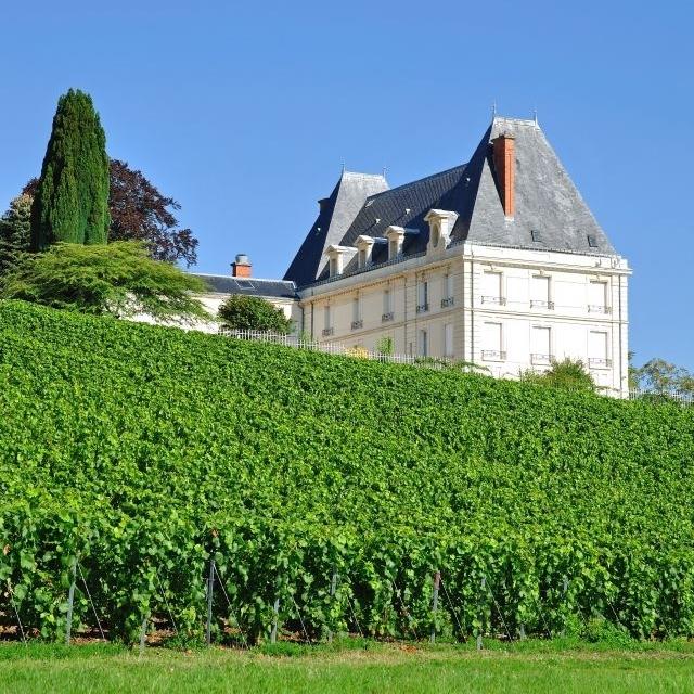 Vineyard in Epernay