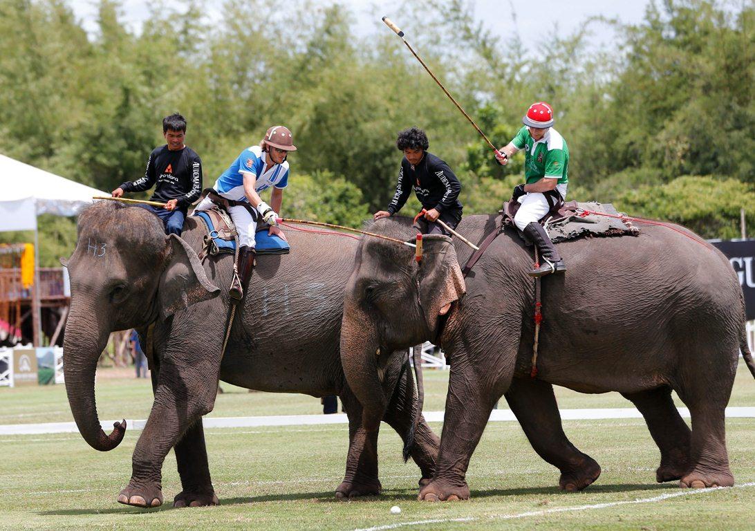 thailand elephant polo
