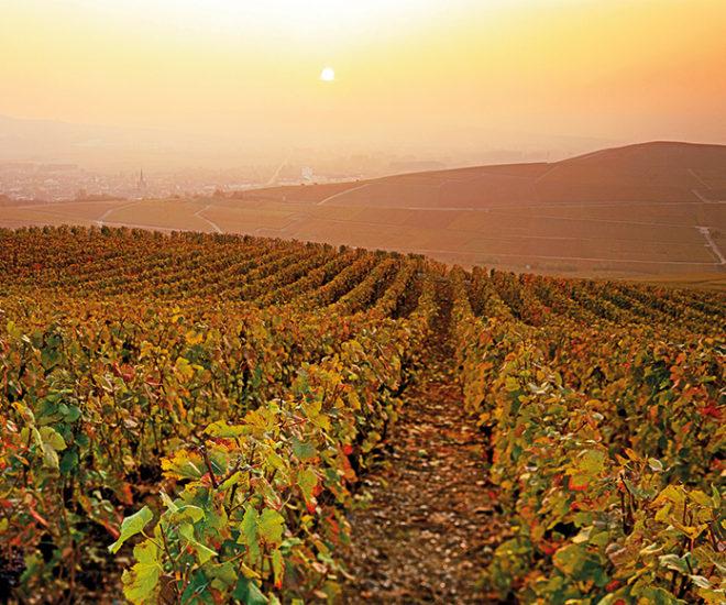 Vignoble-de-Champagne