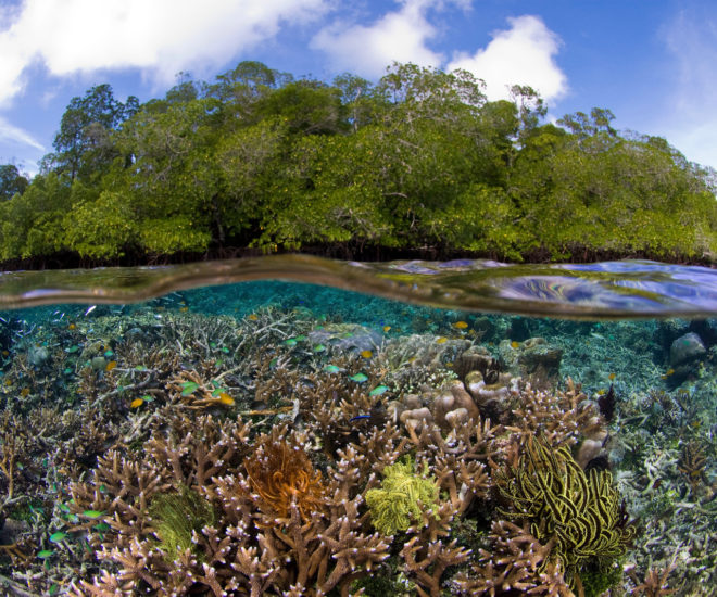 The calm, clear water in Bird's Head allows corals to grow very near the surface in this unique environment; © Burt Jones and Maurine Shimlock