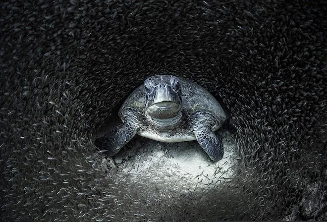 Aimee Jan, Winner of Ocean Photographer of the Year 2021 Blancpain@660px