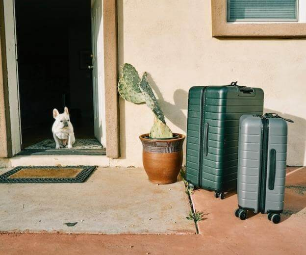 luggage at the door with dog